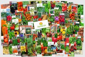 Интернет магазин семян поможет вам навсегда забыть о плохом урожае
